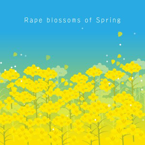Rape blossoms of Spring(満開の菜の花)