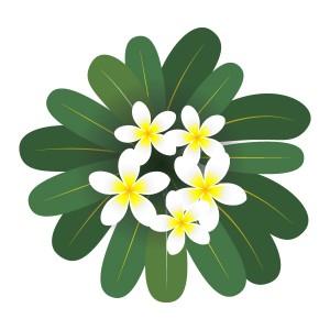 プルメリア(Plumeria)
