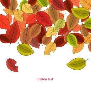 落ち葉(Fallen leaf)