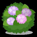 露地植えの紫陽花